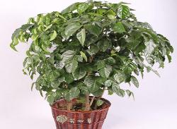 绿植花卉租赁