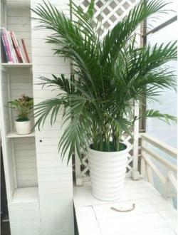 西安办公室绿植租赁